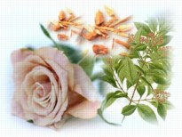 Sandalwood Rose Scented Skin Care Products