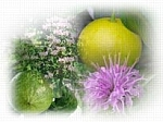 Bergamot EO Scented Products