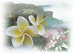 Frangipani Scented Products