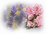 Lavender Rose Scented Products