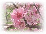 Peach Blossom Scented Products