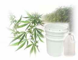 Hemp Seed Cream 1 Gallon