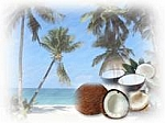 Coconut Cream Scented Products
