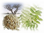Frankincense Scented Products