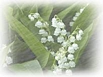 Lily of the Valley Scented Products